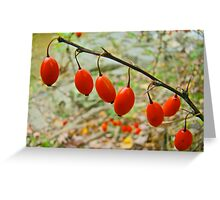 Japanese Barberry - Berberis thunbergii  Greeting Card