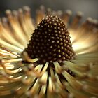 Banksia by Ben Loveday