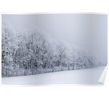 Frosted trees 2 Poster