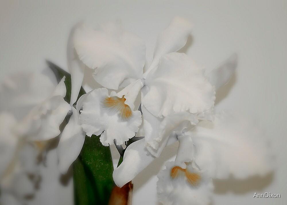 White on White by AnnDixon