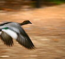 taking off by lilli robertson