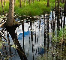Okeefenokee Swamp by Jim Haley