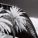 Palm Tree by AndyFeltonPix