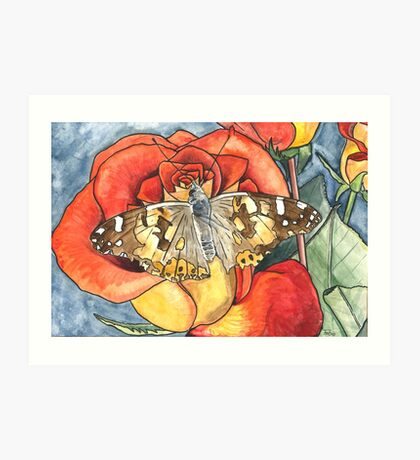 Butterfly on a rose Art Print