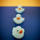 Three Little Ducks  by Pene Stevens