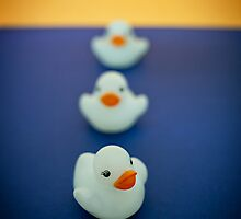 Three Little Ducks  by Pene Stevens