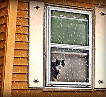 My neighbor's cat safely watching the snow from inside by Jane Neill-Hancock