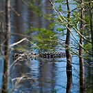 Alligator Through The Trees by Jim Haley