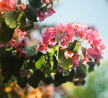 Spring/Primavera by Enzo Campos