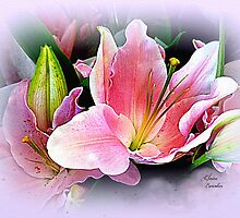 Lily Sunset by Elaine Bawden