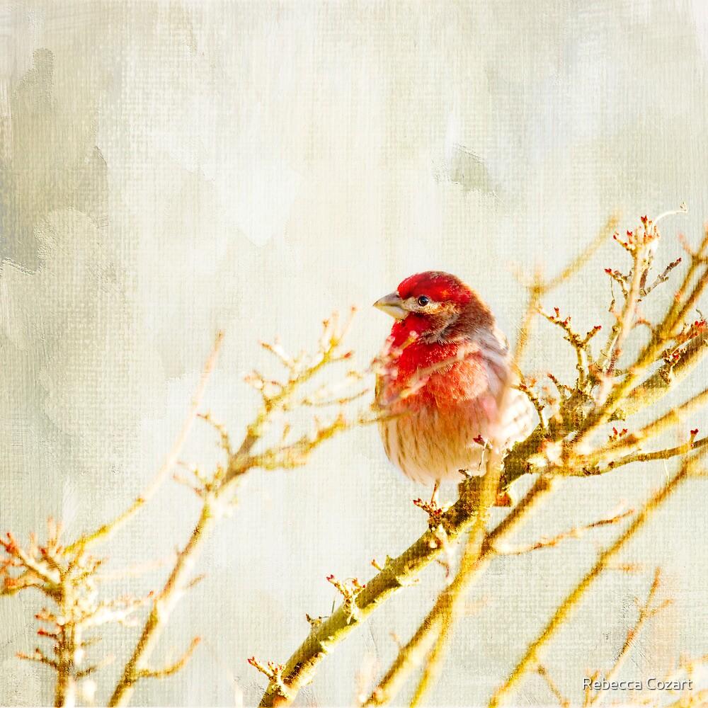 Winter Light by Rebecca Cozart