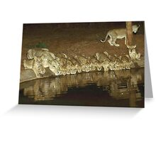 Lions Drinking Water Greeting Card