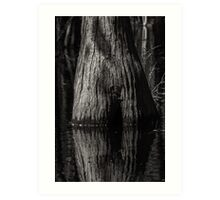 Cypress Trunk Art Print