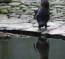 Reflection in the surface - Pinguin by Natas