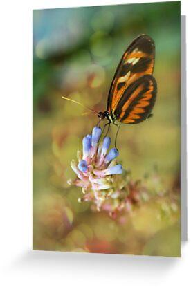 Butterfly  by Linda Cutche