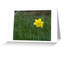 Daffodil with space for text Greeting Card
