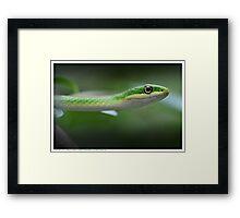 Green Tree Snake Framed Print