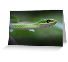 Green Tree Snake Greeting Card