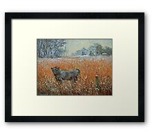 Cow in a snow blizzard Framed Print