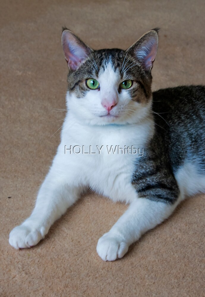 Billy   In need of a home  !Please check out the write up of Billy! by Elaine123
