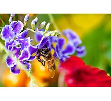 Bee Amongst the Colour Photographic Print