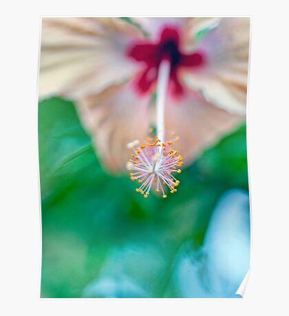 Coral Hisbiscus Stamen Poster