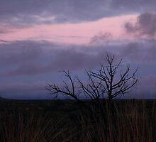 le vent de lavande by knockturmoil
