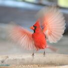 Wings In Motion: Preparing For Takeoff by Cheyenne