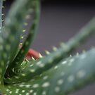 Cactus by Pawel J