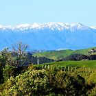 """""""The Western Ruahines, New Zealand"""" by Rosehaven"""