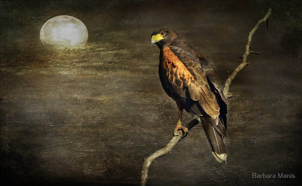 By the Light of the Moon by Barbara Manis