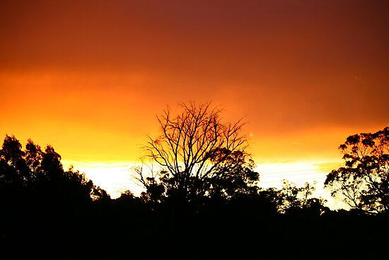sun set by lilli robertson