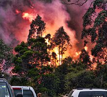 Bush Fire by PollyBrown