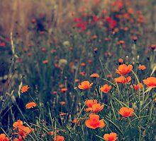 Field of dreams by Beata  Czyzowska Young