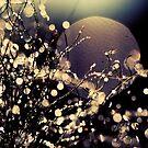 Moonrise in Fairyland by Beata  Czyzowska Young