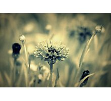 """Dreaming Fields of Flowers "" Photographic Print"