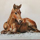 Jackie's Foal by Norah Jones