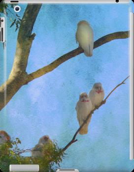 Corellas at Hepburn Srings  by Chris Armytage™