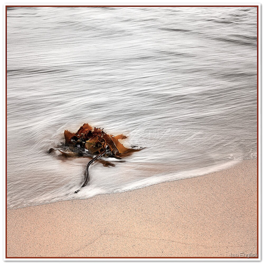 Kelp by Ian English