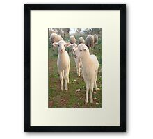 Three Tender Lambs and Five Pieces of Mutton Framed Print