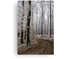 Frosty sylvan walk Canvas Print
