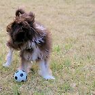 Chinese Crested Powderpuff Puppy dog with soccer ball by CDCcreative
