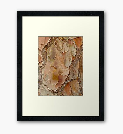 Bark Abstract  Framed Print