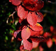 Autumn leaves by Alex Ottosson