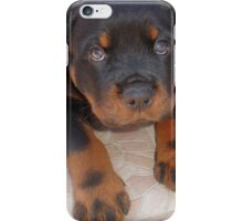 Young Male Rottweiler Making Eye Contact iPhone Case/Skin
