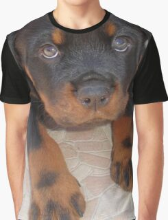 Young Male Rottweiler Making Eye Contact Graphic T-Shirt