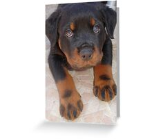 Young Male Rottweiler Making Eye Contact Greeting Card