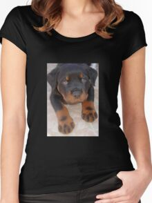 Young Male Rottweiler Making Eye Contact Women's Fitted Scoop T-Shirt