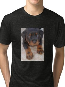 Young Male Rottweiler Making Eye Contact Tri-blend T-Shirt