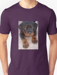 Young Male Rottweiler Making Eye Contact Unisex T-Shirt
